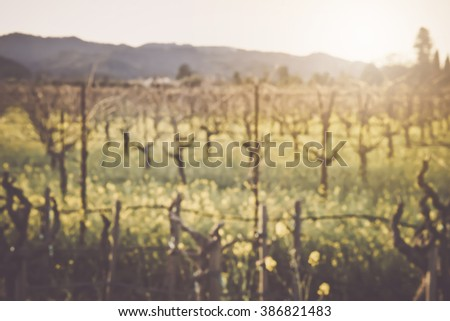 Blurred Vineyard in Spring with Vintage Instagram Film Style Filter - stock photo