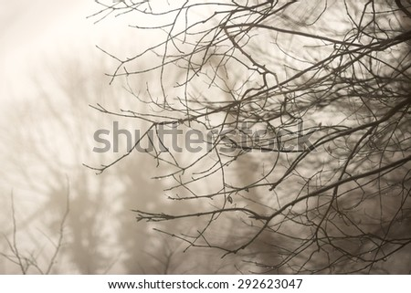Blurred wooden branch background.  - stock photo