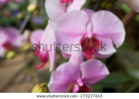 blurry defocused image of purple orchid flower for background - stock photo