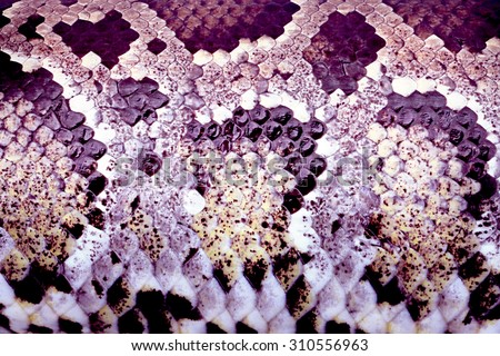Boa snake skin fine retouch with high resolution for design element or background - stock photo