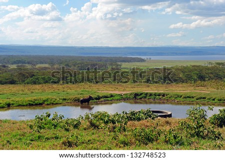 boar takes a dip in the heat of africa - stock photo