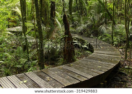 Boardwalk in lush tropical forest - stock photo