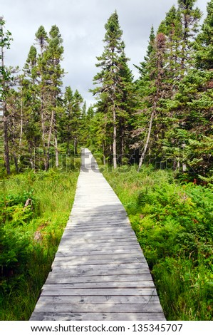 Boardwalk into wilderness of  Northern Newfoundland - stock photo