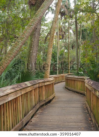 Boardwalk Through the Florida Forest, the Real Florida - stock photo