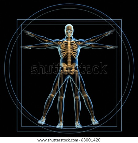 Body and skeleton in vitruvian man  - 3d render - stock photo