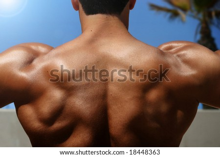 Bodybuilder Back - stock photo