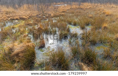 Bog in national park De Groote Peel in The Netherlands - stock photo