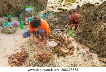 Bohol, Phillippines - December 28, 2008: Phillippine children cut sea urchins on rocks on white sand to gather meat and caviar - stock photo