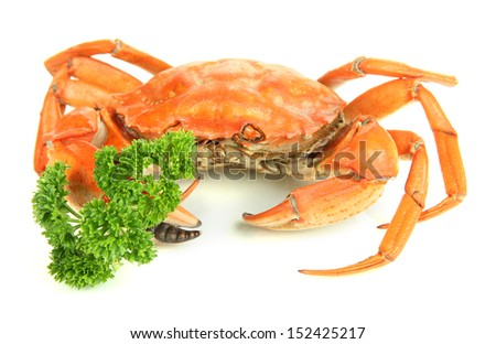 Boiled crab isolated on white - stock photo