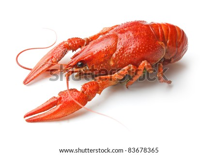 Boiled crawfish is isolated on a white background - stock photo
