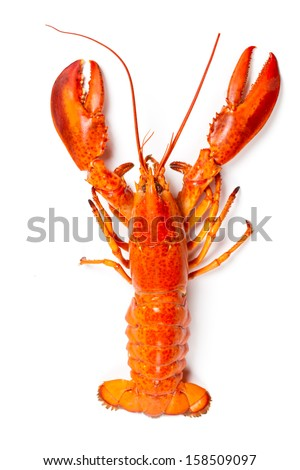 Boiled Lobster - stock photo