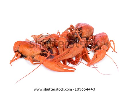Boiled red crawfishes isolated on a white background - stock photo