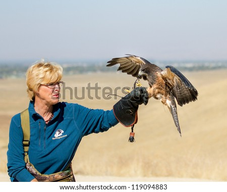 BOISE, IDAHO - OCTOBER 7 : Unidentified trainer at World Center for the Birds of Prey has a Swainson Hawk land on her glove on October 7, 2012. - stock photo