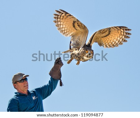 BOISE, IDAHO - OCTOBER 7 : Unidentified trainer at World Center for the Birds of Prey lets a a Eurasian Eagle owl go  on October 7, 2012. - stock photo