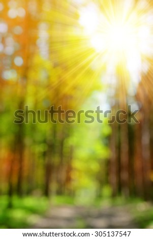 Bokeh in the Autumn forest. Autumnal natural background blurring with sun rays. - stock photo