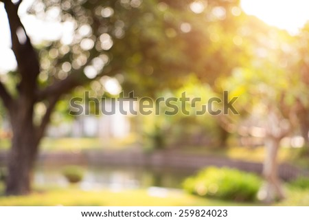 Bokeh leaf with sunlight, warm tone color use for background - stock photo