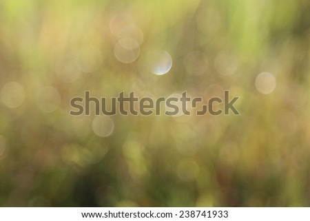 bokeh natural green background with selective focus  - stock photo