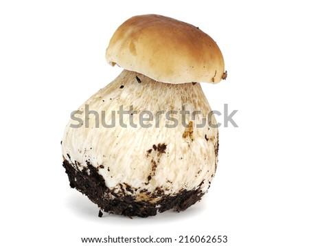 Boletus Edulis or porcini mushroom with moss on a white background - stock photo