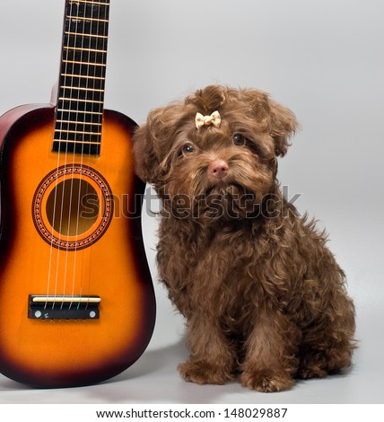 Bolonka ZWETNA with guitar - stock photo