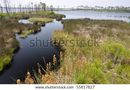 Bon Secour National Wildlife Refuge in Gulf Shores, Alabama - stock photo
