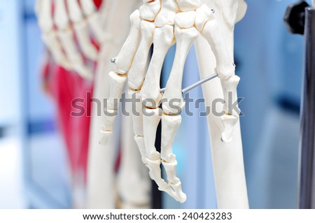 bone hand anatomy - stock photo