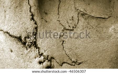 bone, skull texture - stock photo