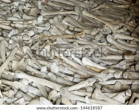 bones background - stock photo