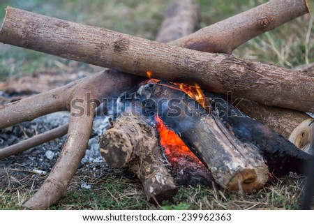 Bonfire on the grass in the forest - stock photo