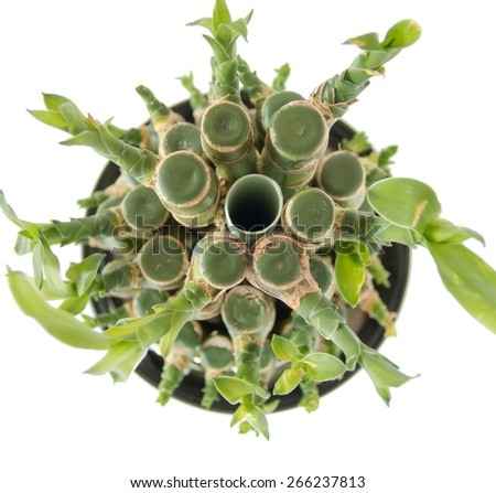 bonsai bamboo sticks tight together top view - stock photo