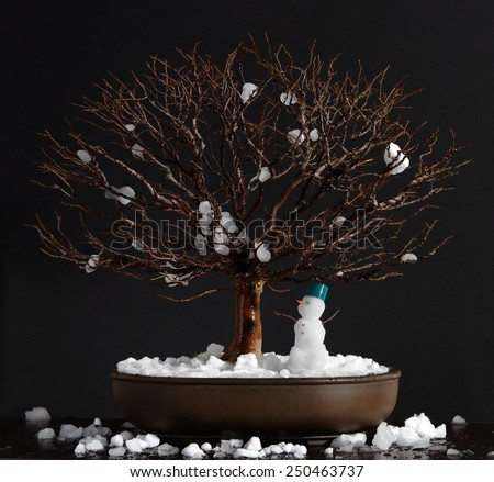 Bonsai elm tree with little snowman on a dark background. - stock photo