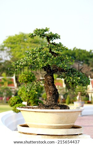Bonsai garden plants - stock photo
