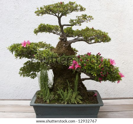 Bonsai Multi Level Flowers - stock photo