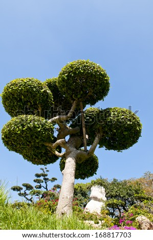 bonsai on blue sky - green plant age old small zen japan root rock miniature - stock photo