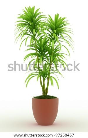 bonsai palm Isolated over white - stock photo