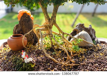 Bonsai root which plat in the tray - stock photo