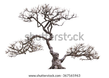 Bonsai tree branches without leaves - stock photo