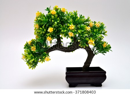 Bonsai tree isolated on white backgroud - stock photo