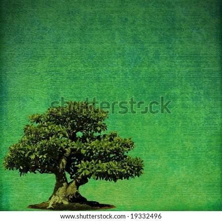 Bonsai tree on grunge background - stock photo