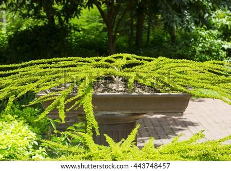 Bonsai tree park, exhibition - stock photo