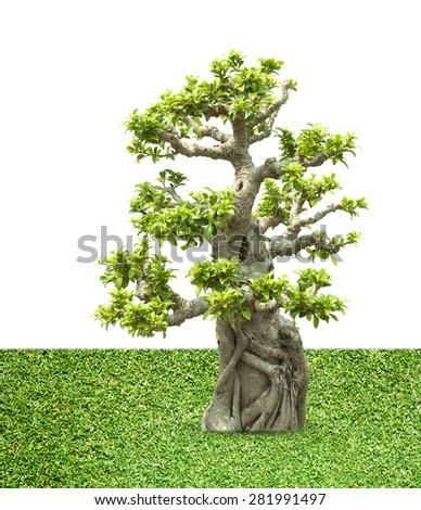 Bonsai trees - stock photo