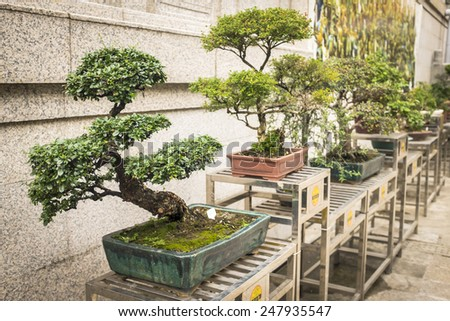 bonsai trees aligned in a row - selective focus on first bonsai - stock photo