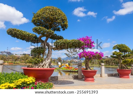 Bonsai trees at City flower garden in Dalat, Vietnam - stock photo