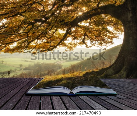 Book concept Beautiful golden Autumn tree lit by sunlight in landscape - stock photo