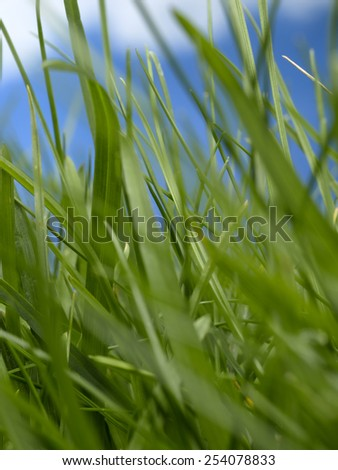 Book in garden with sky background - stock photo