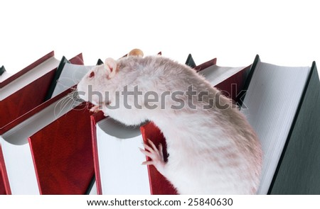 books and mouse - stock photo