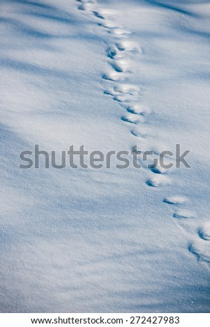 Boot traces in the snow in forest - stock photo