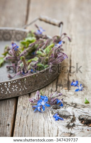 Borage (Starflower) on a wooden board. Also available in horizontal format. - stock photo