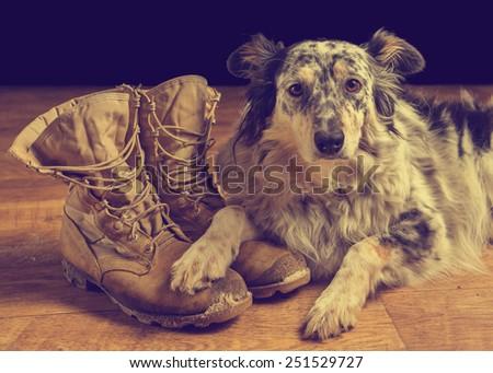 Border collie Australian shepherd dog lying on tan veteran military combat boots looking sad depressed worried abandoned alone emotional bereaved worried feeling heartbreak with retro vintage filter - stock photo