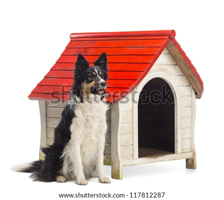 Border Collie sitting next to a kennel and looking away against white background - stock photo