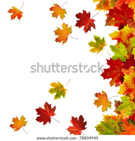 Border Frame of colored autumn leaves isolated on white background  - stock photo